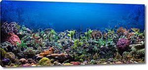 Красивый коралловый риф