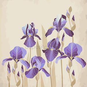 Декоративные Айрис цветок на возрасте фоне
