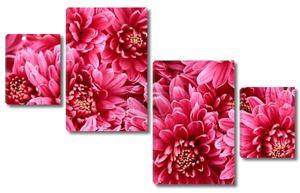 Букет Розовые Осенние хризантемы, крупным планом