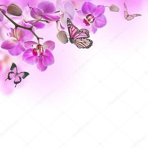 цветочный фон тропических орхидей и бабочки