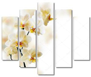 Красивая веточка белой орхидеи