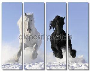 белая и черная лошадь