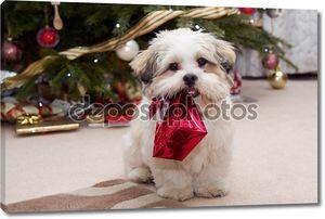 Лхаса Апсо щенка на Рождество