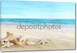 Пейзаж с раковинами на тропическом пляже