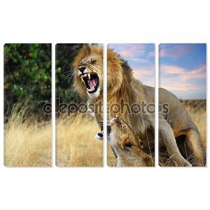 спаривание львов
