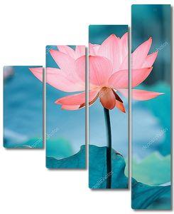 Цветок лотоса в лазурном