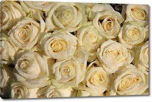 Группа Матовые Белые розы