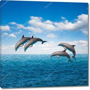 пакет Прыжки дельфинов