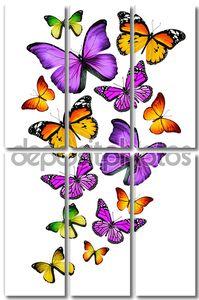 много различных бабочек, изолированные на белом фоне