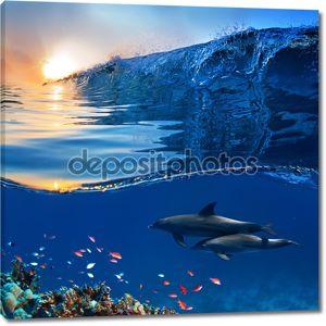 Два красивых дельфинов, плавание под водой через кораллового рифа Фу