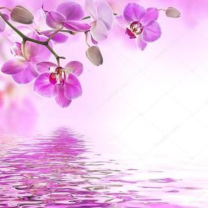 Фон с тропической орхидеей