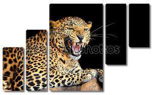 Леопард на черном фоне