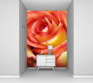Красно-желтые розы