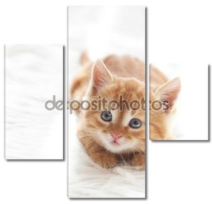 Милый рыжий котенок