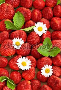 Свежая клубника с цветы ромашки