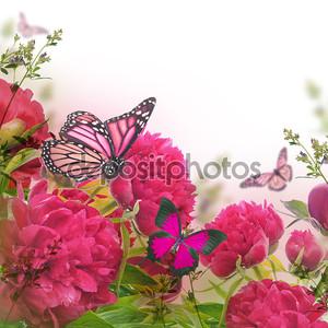 Розовые пионы и бабочки