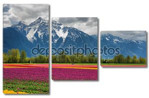 Тюльпаны и горы