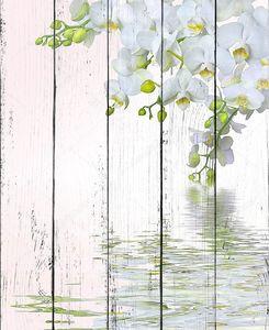 Красивый белый цветок орхидеи