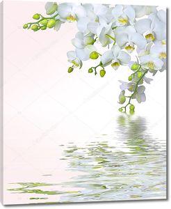 Красивый цветок орхидеи над водой
