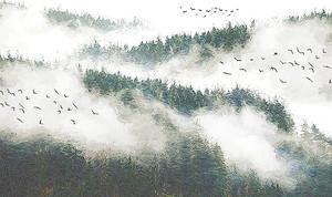 Туман стелется