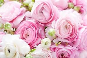 Белые и розовые лютики