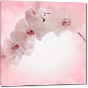Розовый фон с цветки орхидеи