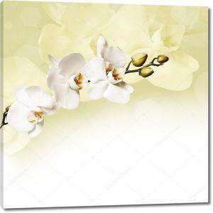 Красивая белая орхидея  на бледно-желтом фоне