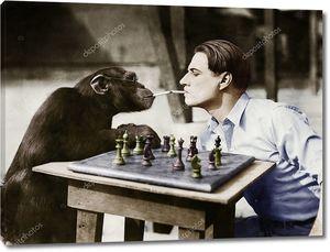 Шимпанзе курит сигареты за шахматами