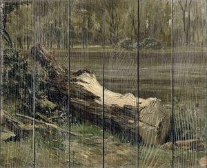 Аэс Карлос де. Штудия (изучение) ствола дерева