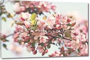 Розовый Яблоневый цвет летом