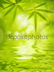 Листья бамбука над водой