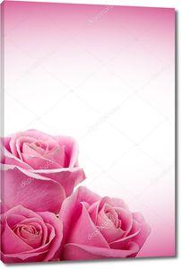 романтичные розы