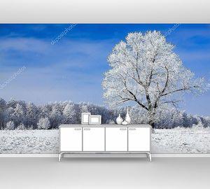 Деревья, покрытые снегом против неба.