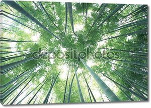 Зеленый бамбуковый лес