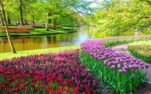 Фестиваль тюльпанов в парке