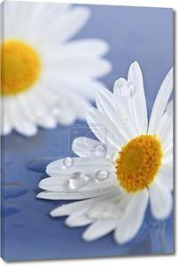 Цветы ромашки с каплями воды