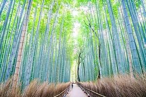 Красивая бамбуковый лес