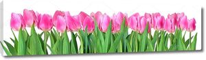 Снимок тюльпанов на белом фоне .