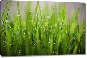 Зеленая трава на траве с росой упал