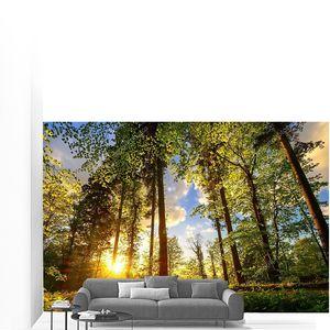 Тропинка в лесу или парке, где листья окрашены теплым закатным светом