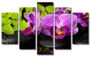 Спа Натюрморт фиолетовая орхидея (фаленопсис), зеленые ветви