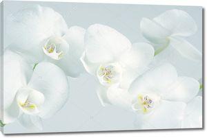 Орхидеи крупным планом