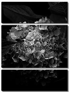 Красивый букет на черном фоне