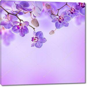 Тропические орхидеи