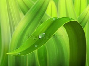 водное снижение на макросе травы