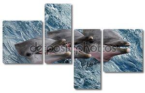 Дельфины выглядывают из воды
