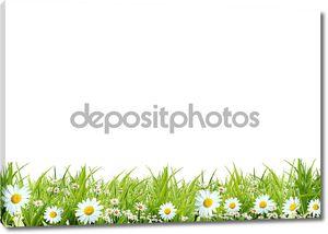 Трава с белыми ромашками