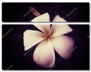 Цветок пирожного с миндальным кремом
