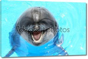 рад, что красивый Дельфин, улыбаясь в воде голубой бассейн на