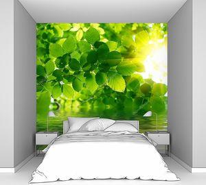 Зеленые листья, отражая в воде